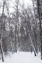 Path covered with snow vertical position in park during heavy snowfall Stock Photography