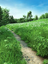Path through a daisy meadow narrow green with daisies Royalty Free Stock Image
