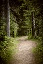 Path in dark moody forest winding through lush green with tall old trees Stock Photography