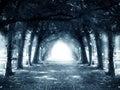 Path in dark mystery forest.