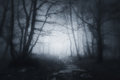 Path in dark and scary forest Royalty Free Stock Photo