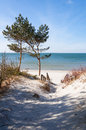 Path in the dunes to the baltic seacoast and two pines Stock Image