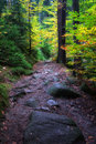 Path in enchanted aurumn forest trail autumn the mountains beauty of nature Stock Images