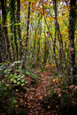 Path through enchanted autumn forest in italian Stock Photography