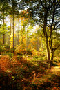 Path through English forest in Autumn Royalty Free Stock Photography