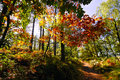 Path through English forest in Autumn Royalty Free Stock Images