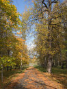 Path with fallen leaves Royalty Free Stock Photography