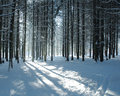 Path in fir forest Stock Photos
