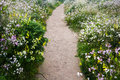 Path Among the Flowers Royalty Free Stock Photo