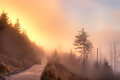 Path foggy autumn sunrise from leading to clingmans dome great smoky mountains national park tennessee usa Stock Photography
