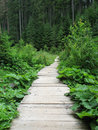 Path in Forest Stock Photos