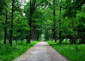 Path in the forest lane beautiful summer Royalty Free Stock Photo
