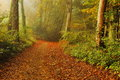 Path in the forest rusty from dying leaves middle of a small inside luxembourg Royalty Free Stock Photography