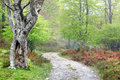 Path in the forest in spring Royalty Free Stock Photo