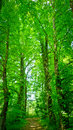 Path forest under high green trees udine italy Royalty Free Stock Photography