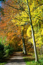 Path through forest with vibrant autumn colors tree in yellow and orange Stock Photo