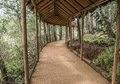 Path in the forest wood perspective background Stock Photography