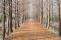 Path in the forrest Royalty Free Stock Photo