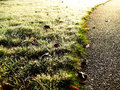 Path of Frost and Light Royalty Free Stock Photos