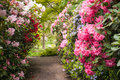 Path in garden small a with beautiful flowers Royalty Free Stock Image
