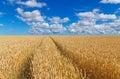 Path In A Golden Wheat Field
