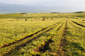 Path in grassland kalajun with at sunset located xinjiang china Stock Image