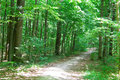 Path in green forest Stock Photos