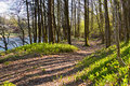 Path through the green forest floor next to the salmon river Tovdalselva, in Kristiansand, Norway Royalty Free Stock Photo