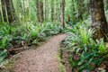 A path into a green forest leading tropical Stock Photography