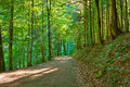 Path By The Green Forest. Natu...