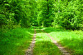 Path in a green forest during spring Royalty Free Stock Photography