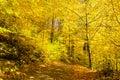 Path guiding through autumn park beautiful Royalty Free Stock Images
