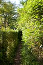 Path between hedges small narrow Royalty Free Stock Photo