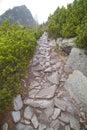 Cesta na Vysočině