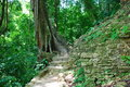 Path in the jungle, Palenque Maya ruins, Mexico Stock Images