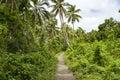 Path in Jungle, Solomon Islands Royalty Free Stock Photo