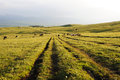 Path in kalajun grassland with at sunset located xinjiang china Stock Image