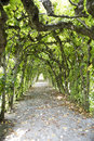Path in labyrinth alley with trees Royalty Free Stock Photography