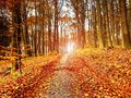 Path leading among the beech trees in early autumn forest. Fresh colors Royalty Free Stock Photo