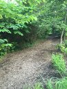 Path leading to the woods a into lined with shrubs and trees Stock Images