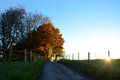 Path leading uphill to sunlit autumn trees at sundown as the sun sets beyond the hill Royalty Free Stock Photo