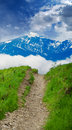 Path through lush countryside Stock Photography