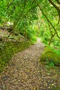Path Through Lush Green Trees Stock Image