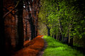 Path in Magic forest, summer and autumn Royalty Free Stock Photo
