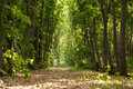 Path through maple woods wide pathway in forest at summer sunny day Royalty Free Stock Image