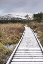 Path through Marsh at Uath Lochans in Scotland. Royalty Free Stock Photo
