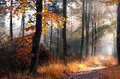 Path in misty autumn forest Royalty Free Stock Photo