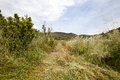 Path mown through long grass valencia region spain Stock Photo