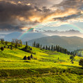 Path near field with haystacks composte landscape haystack on a green meadow in the mountains Stock Image