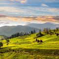 Path near field with haystacks at sunrise composte landscape haystack on a green meadow in the mountains in light Stock Photo